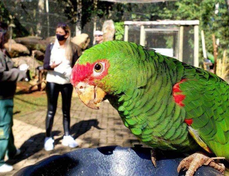 Com restrições de público, atrações turísticas reabrem em Gramado e Canela