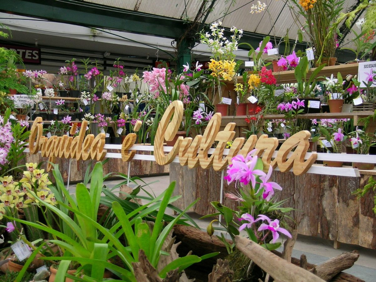 17º Exposição Nacional de Cattleya intermedia de Gramado acontece de 15 a 19 de setembro